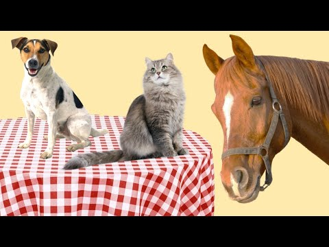 Why Don't We Eat Cats, Dogs, And Horses?