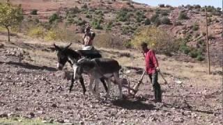 Maroko - Uprawa roli [HD]