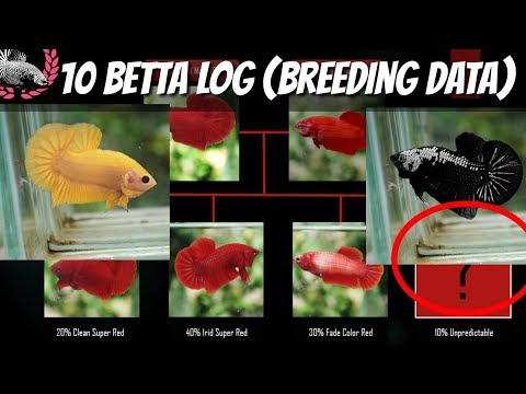BETTA BREEDING DATA / BETTA LOG FOR KNOWLEDGE AND REFERENCE