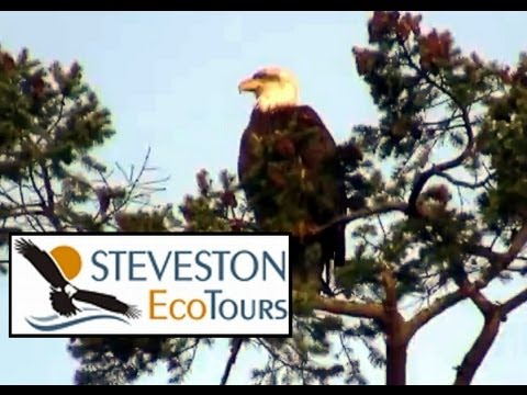 Steveston Eco Tours