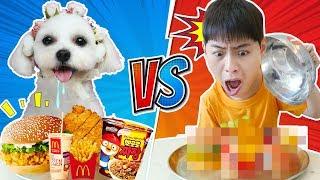 진짜음식VS지우개음식! 강아지가 골라주는 복불복 리얼푸드 게임!Real food challenge like BoramTube
