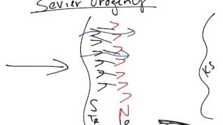 102 - M Sevier Orogeny