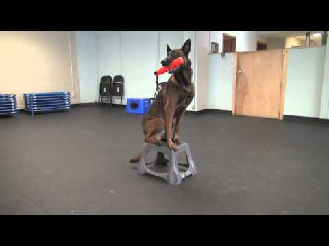 Fetch And Hold | Tyler Muto Dogmanship