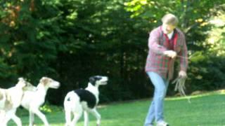 The Pied Puppy Piper :))