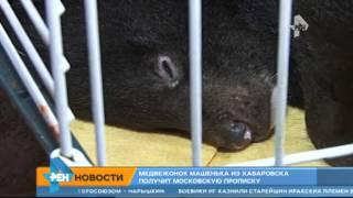 Медвежонок Машенька из Хабаровская получит московскую прописку(, 2015-04-14T09:59:05.000Z)