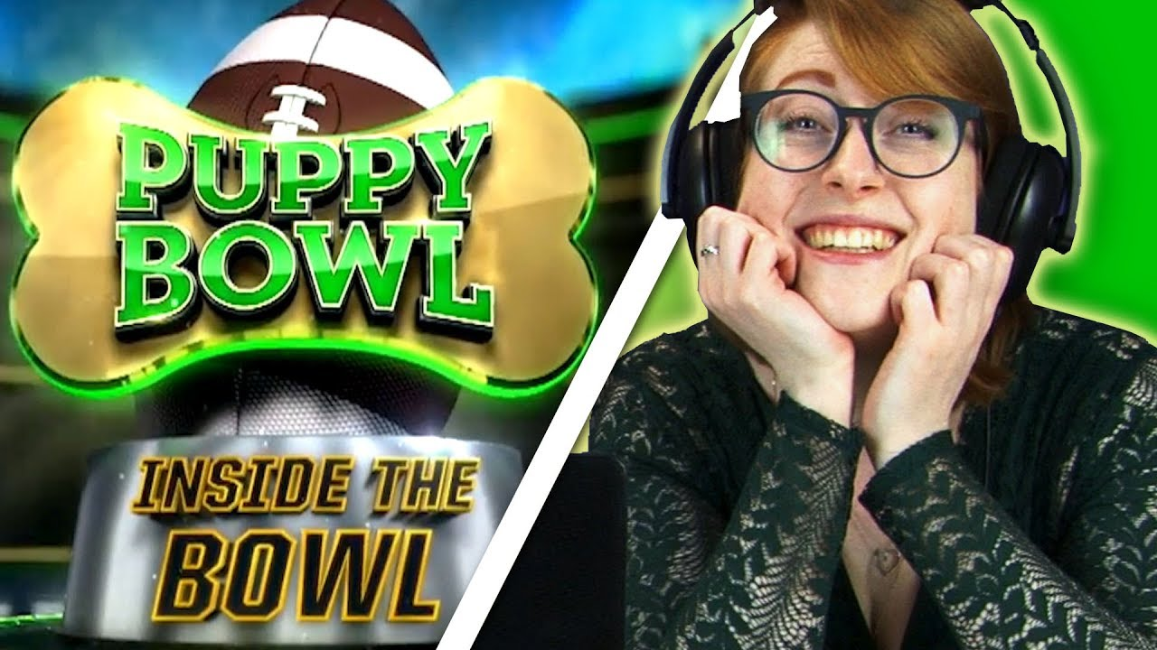 irish-people-watch-the-puppy-bowl-for-the-first-time
