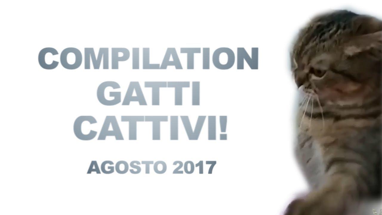 Video Divertenti Gatti Cattivi Agosto 2017 Videomix Youtube