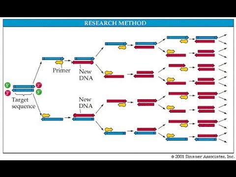 PCR (polymerase chain reaction) in detail