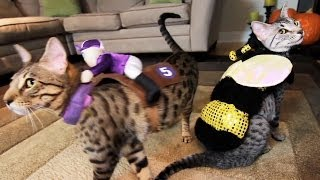 KITTY COSTUME PARTY