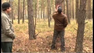 Как определить возраст дерева и правильно его спилить(Текст новости ..., 2014-09-18T08:14:56.000Z)