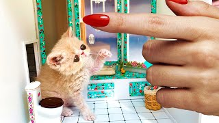 The Smallest ever RESCUED kitten gets a New House!
