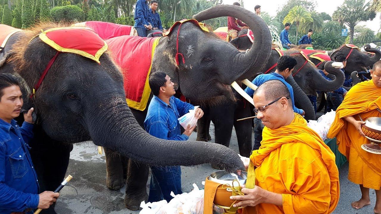 ช้างแสนรู้สวนนงนุชพัทยา 87 เชือก ตักบาตรพระสงฆ์ วันช้างไทย #1