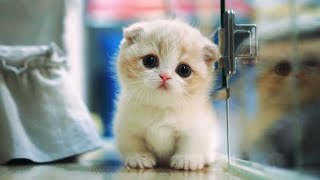 Top 10 MOST CUTEST CAT BREEDS IN THE WORLD