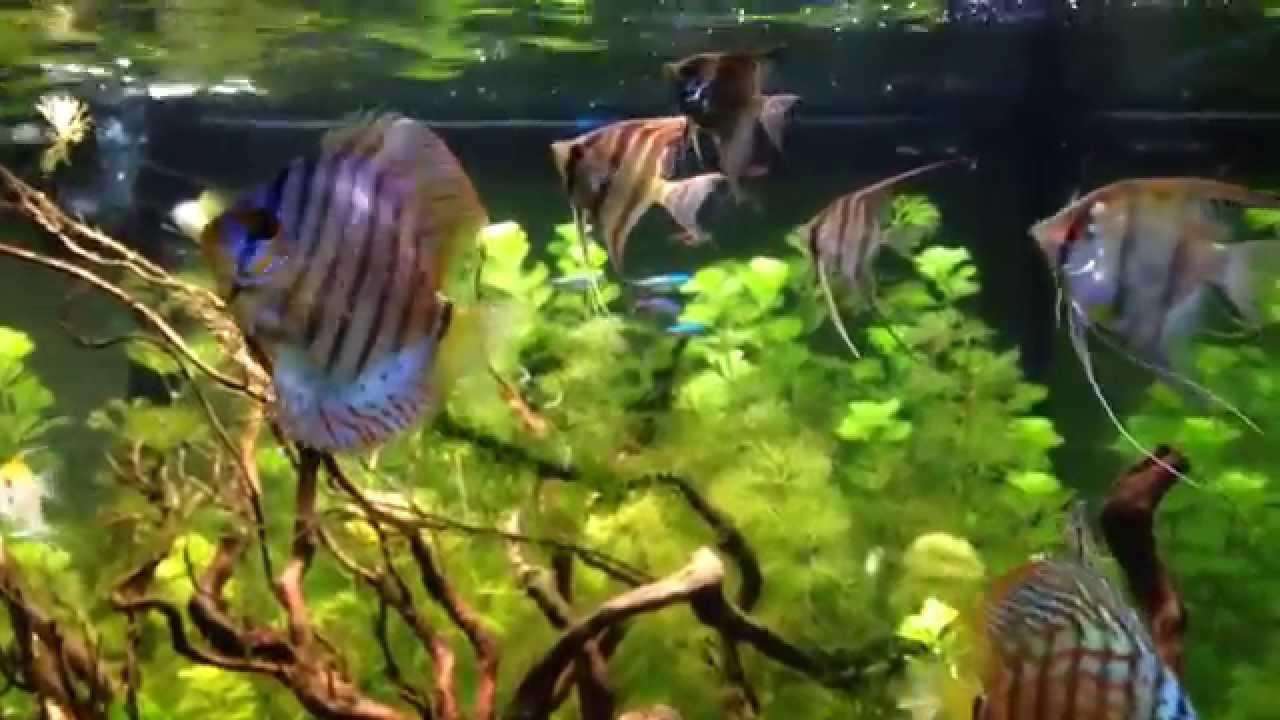 Aquazone Aquarium
