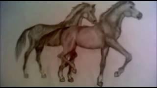 Мои рисунки лошади.
