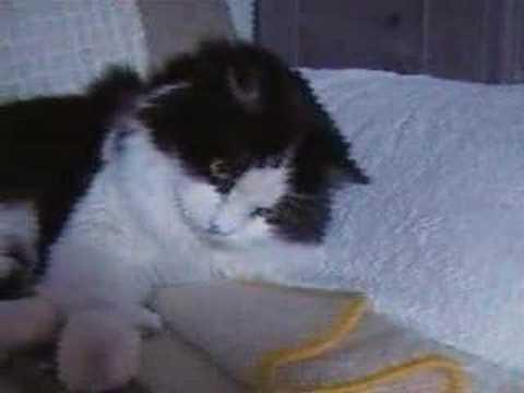 Film Katzen