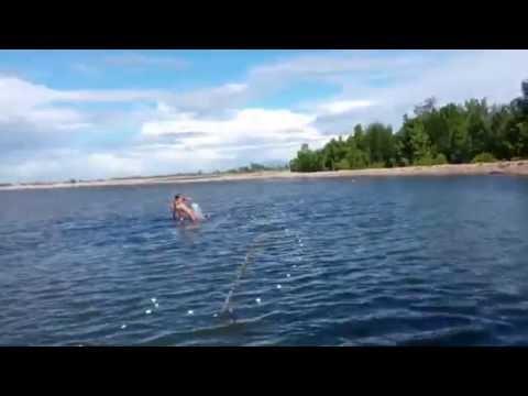 video penangkapan ikan bandeng di empang, lanjut dibakar mmmmmgurih
