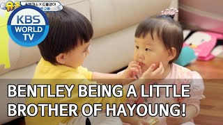 Bentley being a little brother of Hayoung! [The Return of Superman/2020.05.31]