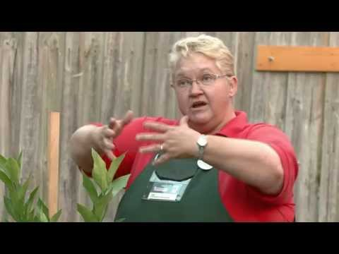 How To Stake Plants - DIY At Bunnings