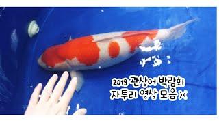 2019 한국 관상어박람회 - 자투리 영상 모음