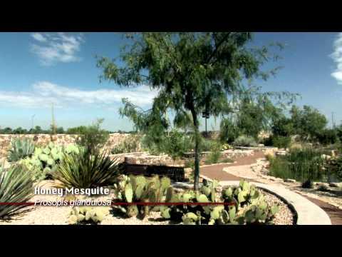 Cactus & Succulent Garden, El Paso Botanical Garden