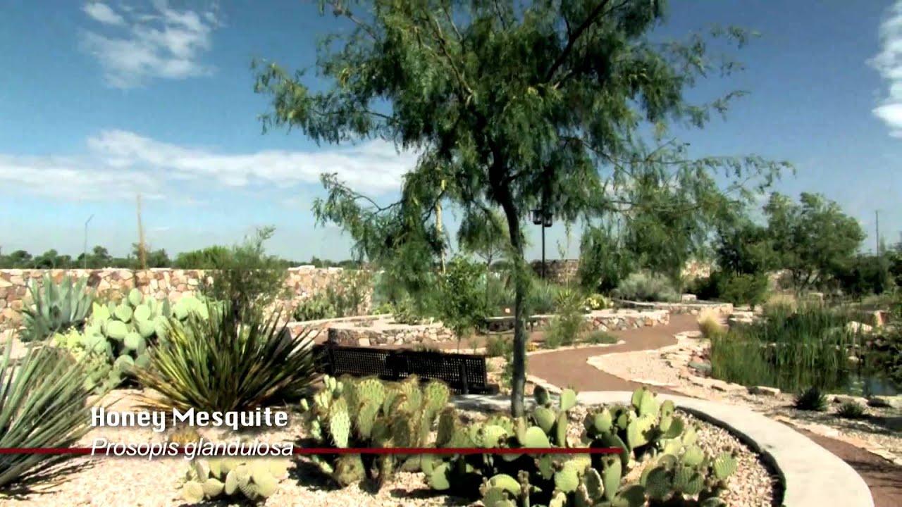 cactus succulent garden el paso botanical garden youtube - The Garden El Paso