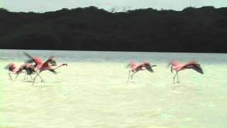 pink flamingo trailer.avi