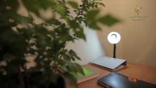 ليه بينصحونا منحطش نباتات فى غرفة النوم | اساسيات من ابتدائي في العلوم