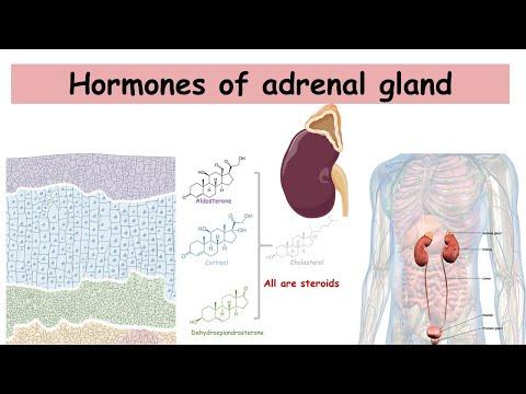 Hormones of adrenal