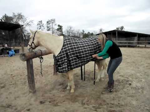 why did the horse put on a blanket How to put a Winter Blanket on a Horse by SaddleOnline.com - YouTube