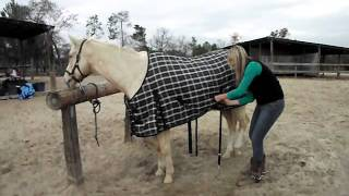 How To Put A Winter Blanket On A Horse By Saddleonline.com