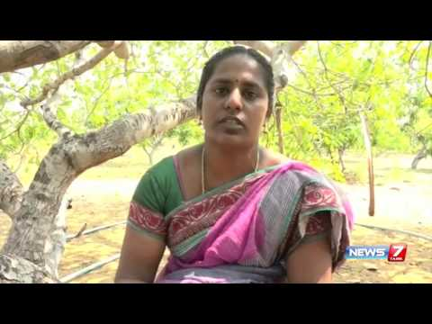 Educated couple turned farmers at Ramanathapuram | News7 Tamil