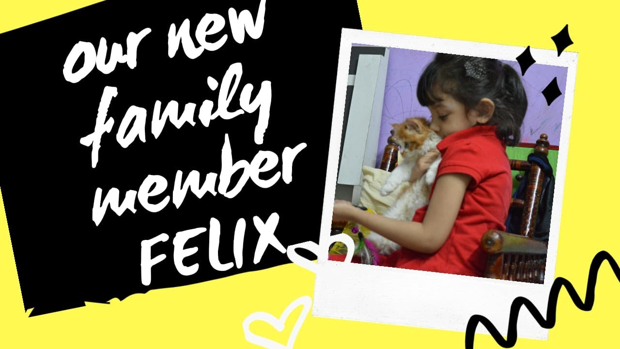 Introducing Our New Family Member Felix The Cat Youtube Funny Cat Videos Felix The Cats Funny Cats