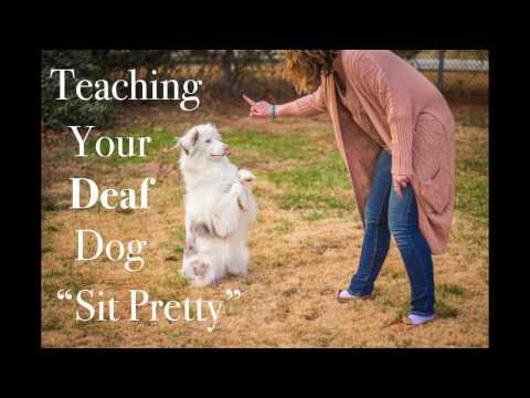 Teach your deaf dog sit pretty