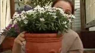 Tips On Garden Planters, Pots, & Flower Boxes : How To Select The Right Size Pot For Your Plant