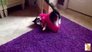 Кошки падают