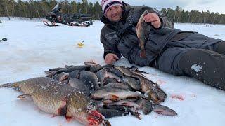 Рыбалка на северном озере таких окуней я еще не видел