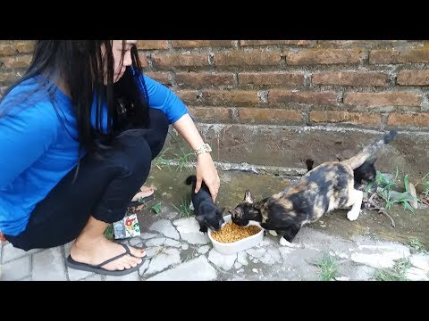 New hungry 2 kittens black meow on the street