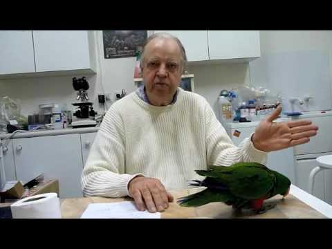 Behavioural Problems in Randy Eclectus Parrot #4 220710