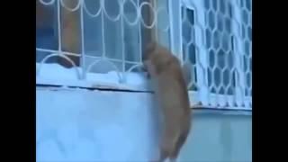 Смешные ролики про кошек