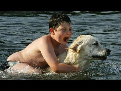 Вопрос: Как можно охарактеризовать человека, ненавидящего собак?