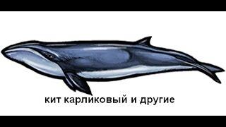 Русская Рыбалка 3.99 Побережье Чили