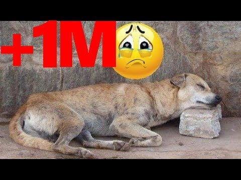 homeless dog waiting to die... then guess what happened