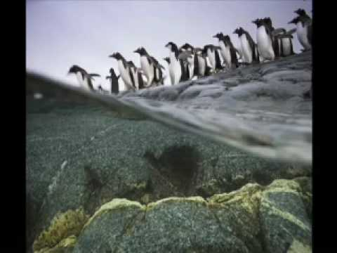 Polar Obsession (National Geographic).mp4
