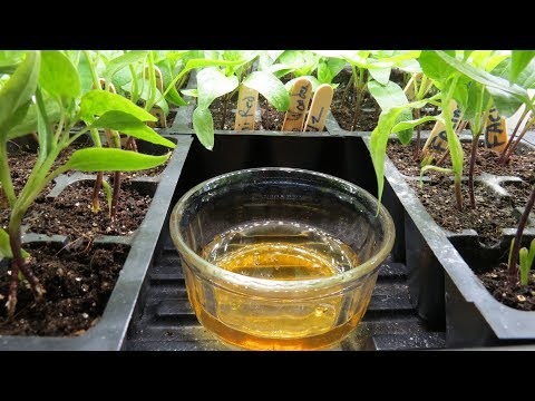 how-to-use-apple-cider-vinegar-to-stop-fungus-gnats-in-vegetable-&-house-plants:-set-up-examples