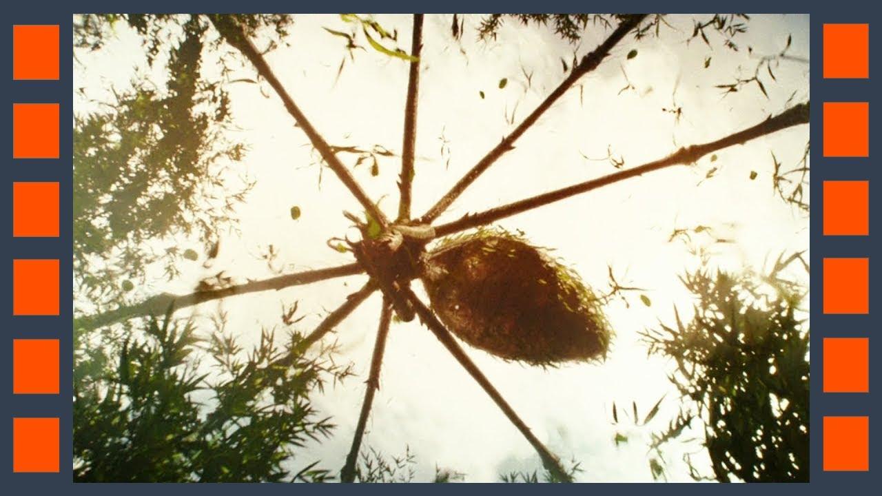 Нападение гигантского паука  — «Конг: Остров черепа» (2017) сцена 2/8 HD