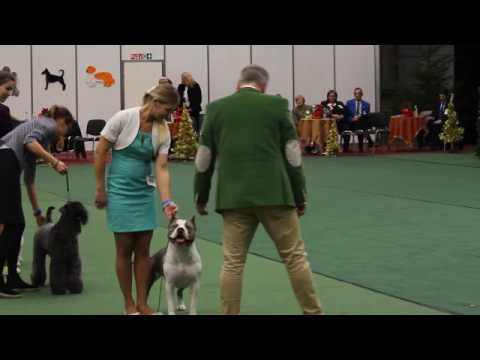IDS Vilnius 2016 Best in group terriers
