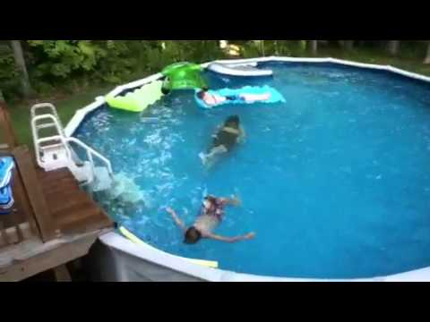 There 39 S A Shark In The Pool Youtube