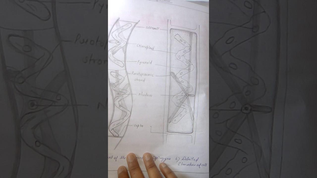 practical notebook of biology