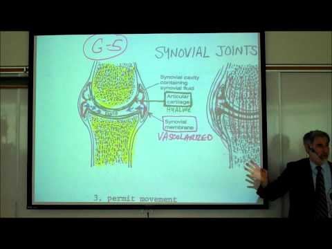 ARTHROLOGY; THE JOINTS OF THE BODY; PART 1 by Professor Fink
